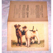 Prancha Antiga Desenho Fox Terrier