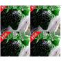 Morango 6 Cores 10 Semente De Cada Cor-total 60 Frete Grátis