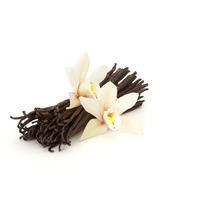 Muda Da Trepadeira Baunilha, Orquídea Vanilla Planifolia