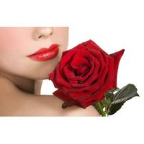 Kit 6 Mudas De Rosas, Com As Mais Belas Cores Naturais !!!