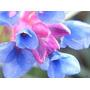 20 Bromelias Tillandsia Adultas P/ Jardim Vertical