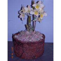 Musgo Seco Sphagnum - 500 G - Jardins - Orquídeas - Vasos