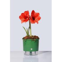Vaso Com Sistema De Irrigação Automática - Vaso De Planta