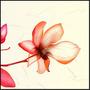 Quadro Moldura Aluminio Decoração Flor Flower 3d 60x60