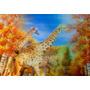 Imagem 3d Tridimensional Quadro Gravura Imagem Safari Animal