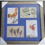 Quadro Com 4 Imagens De Aves / Pássaros - Diversos Artistas