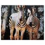 Tela De Zebras Africanas Fullway