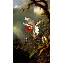 Beija-flor Orquídea Branca E Vermelha Heade Na Tela Repro