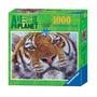 Quebra-cabeça Importado (2082) Puzzle 1000pcs Bengal Tiger