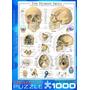 Quebra-cabeças - Crânio Humano 1000 Eurographics Pedaço