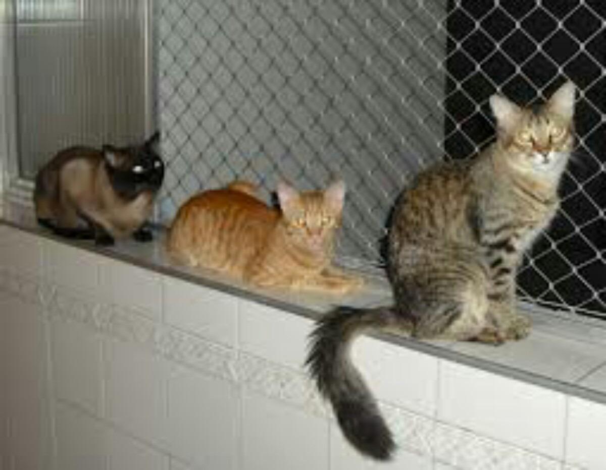#624B2E rede de proteção para gatos 1468 Tela Janela Gatos