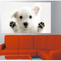 Adesivo Parede Porta Pet Shop Animais Cachorro - Brindesi9