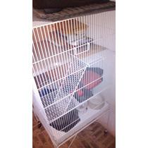 Gaiola Ferret,roedores Ximxila,porquinho Da India ,pássaros