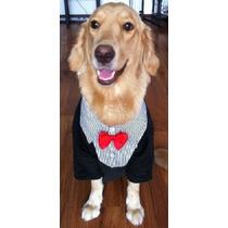 Terno Para Cães - Raças Grandes - Promoção Imperdível!!!