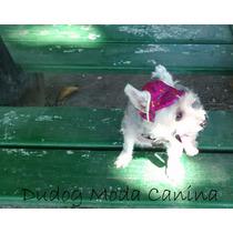 Boné De Cachorro Rosa Com Ossinhos - Pp - Frete Grátis!