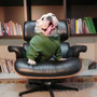 Roupa Moleton Moletom Roupinha Bulldog Ingles / Frete Grátis
