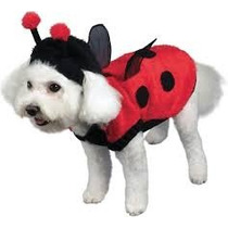 Roupa Cachorro Joaninha Raças Pequenas Pet Lord
