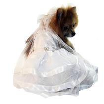 Vestido De Noiva Para Cachorra G