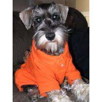 Roupa Cachorro Camisa Polo - Pet Lord Tamanhos Pequenos