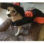 Fantasia Para Cachorro Halloween De Bruxinha (pp,p,m,g,gg)