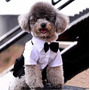 Roupa Cão Cachorro Terno Social Festa Casamento Tamanho P