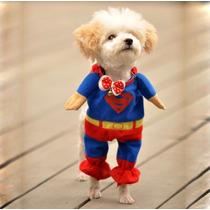 Roupa Fantasia Cachorro Gato Superman Tamanho Pp
