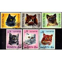 Col-03024 Yemen 202/07 Gatos Felinos Fauna U