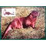 Fil A174 Alemanha Fauna Lontra 4 Máximos Postais Com Cpd