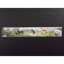 Cães - Fauna - Polonia Série Completa Com 5 Selos