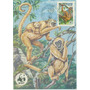Brasil 1984 - Máximo Postal Macaco Muriqui Fauna