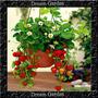 Morango Abacaxi Sementes Importadas Flor Para Mudas