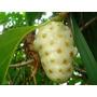 Noni Fruta Exótica-ômega 6,antiinflamatória Morinda Semente