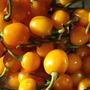 40 Sementes Pimenta Arari Bode Amarela Frete Grátis