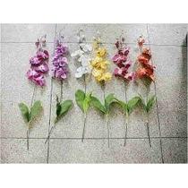 Sementes Da Orquídea Borboleta Sortida
