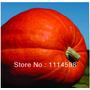 Abóbora Gigante 20 Sementes Frete Grátis