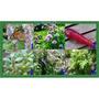 Kit Ervas Culinária Finas 6 Especies 120 Sementes Separadas