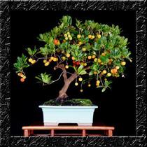 Árvore De Morango - Sementes Fruta P/ Muda Ou Bonsai