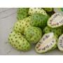 Belas Mudas Da Fruta Noni - Morinda Citrofolia