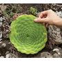 Sementes Suculenta Aeonium Tabuliforme Sempervivum Echeveria