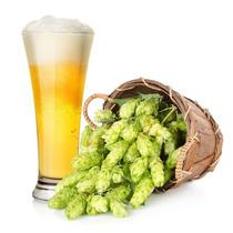 Lupulo Trepadeira Cerveja Humulus Lupulus Sementes Pra Mudas