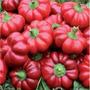 90 Sementes Da Pimenta Pitanga Frete Grátis - Ferrazmg