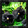 Amor Perfeito Crystals Black Preto Sementes Flor Para Mudas