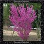 Cercis Chinensis Sementes Flor Bonsai Para Mudas