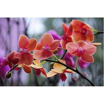 Kit 28 Sementes Orquídea Butterfly 7cores 4 De Cada F.grátis