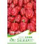 10 Sementes De Pimenta Vermelha Tipo Sino Frete Grátis