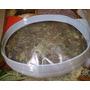 Chá De Bugre ( Folhas Desidratadas ) 2 Kg