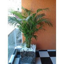 Palmeira Areca Bambu No Cachepot De Vidro Medida 35x35x35cm