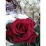 Linda Mini Rosa Vermelha Idêntica A Natural Buquê Vaso