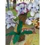 Vaso De Orquídea Em Eva
