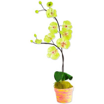 Arranjo Floral - Orquídeas Das Montanhas